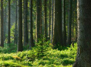 Illustration de l'investissement forestier